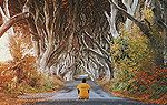 A man sitting in front of a row of trees in Northern Ireland