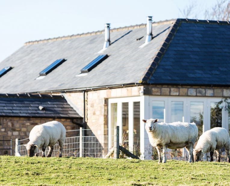 sheep in a field with a house in the background