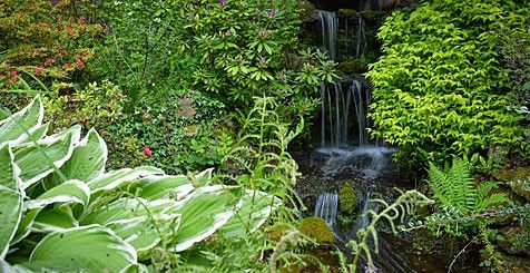 Chester Zoo, secret garden. A waterfall surrounded by trees and plants