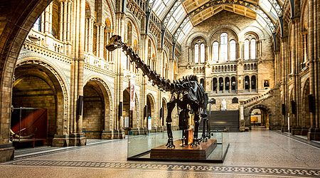 Dinosaur in the Natural History Museum