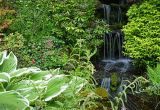 Waterfall at Chester Zoo