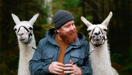 A man holding two white alpacas at Alpacalyeverafter, Portinscale, Keswick, Lake District, England.