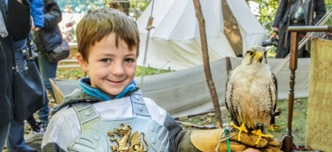 Small boy with hawk in costume at Robin Hood festival, Notts