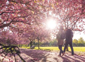 couple walking through spring blossom trees in the park