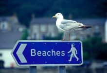 A beaches sign with seagull on top in Brighton