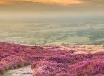heather on the North York Moors