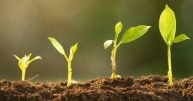 Four seedlings growing